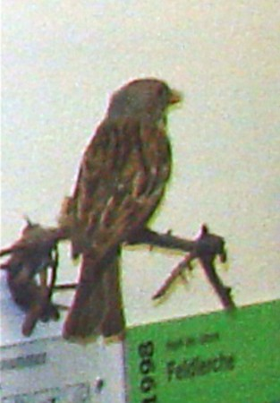 Barbara Downs photo of bird before using in mixed-media encaustic piece
